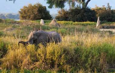 Elefanten im Mana Pools Nationalpark
