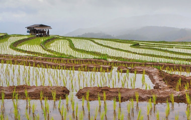 Reisterassen in Muang La