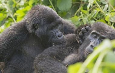 Best Time to Visit Uganda