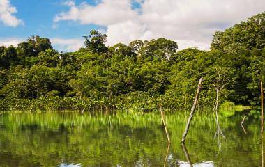 Dichtbewachsene Uferlandschaft im Nationalpark Yasuní, Ecuador