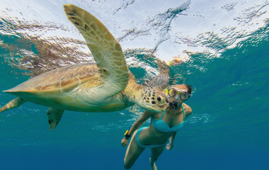 Snorkeling woman with hawksbill turtle, underwater photography