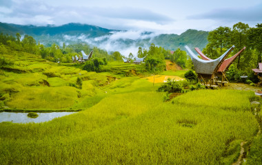 Photo of fields of grass and morning fog in forest near village with traditional tongkonans in Toraja region in Sulawesi Indonesia, Asia