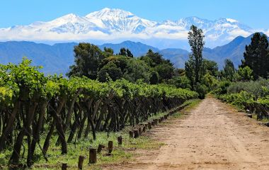 Enchanting-Travels-Argentina-Tours-The beautiful snow capped Andes mountains and vineyard growing malbec grapes in the Mendoza wine country of Argentina