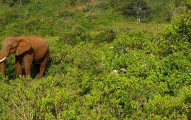 Elefant in Aberdares