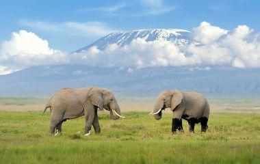 Elefanten, im Hintergund der Kilimandscharo
