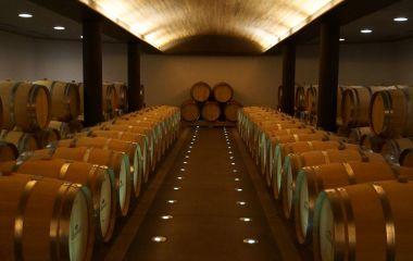 Barrels of red wine, Colchagua, Chile, South America