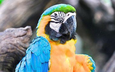 Papagei im Amazonas Regenwald