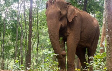 Mondulkiri Elephant, Cambodia, Asia