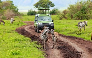 Best time to Travel to Tanzania Africa Safari tour