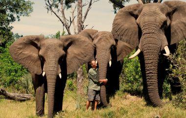 Botswana safari tour