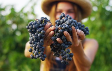 Enchanting Travels France Tours September to harvest vineyards