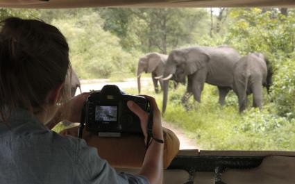 Elephants in wilderness, Tanzania