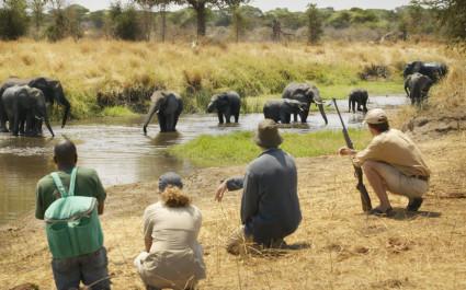 Menschen knieen und beobachten badende Elefanten