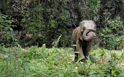 Elefant inmitten von Pflanzen