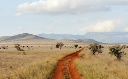 Savannenlandschaft im Nationalpark in Kenia, Afrika