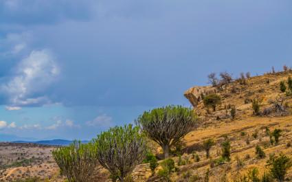 Der Felsen Pride Rock in Kenia, Afrika
