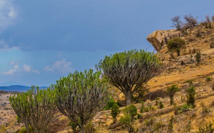 Pride Rock cliff