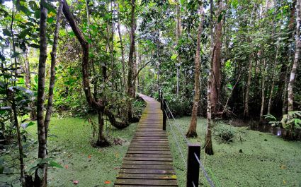 Board walk at Abai Jungle Lodge