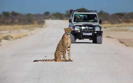 Etosha national park namibia, best road trips