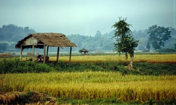green-fields-display-lush-colors-under-a-soft-morning-light-in-the-highland-town-of-hsipaw-in-myanmar-asia-shutterstock_1551706