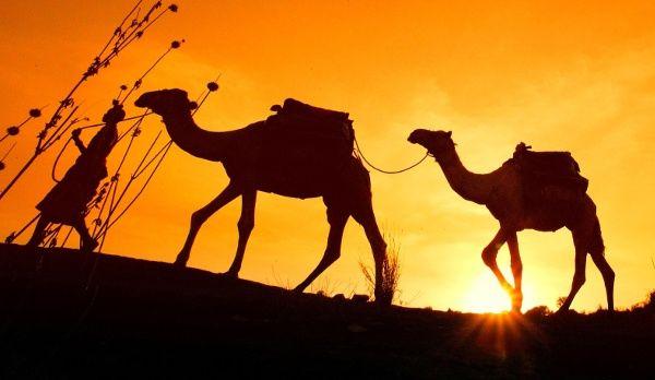 Auf Ihrer Afrika Individualreise werden Sie Ihnen öfter begegnen: Kamele