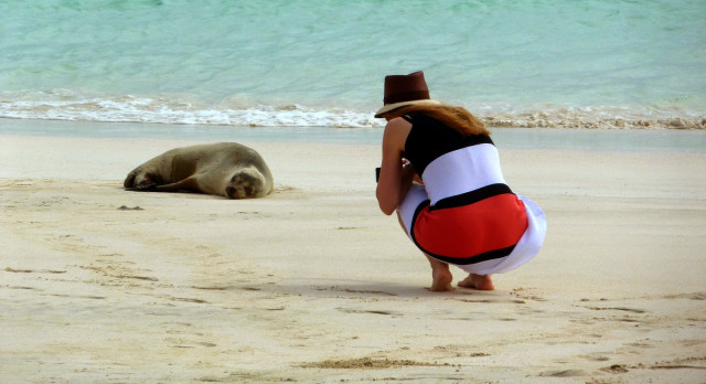Photographing a seal on the beach - Visit the Galapagos Islands