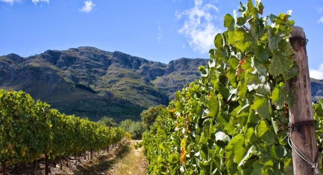 Stellenbosch - World's best plantations and vineyards