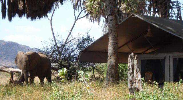 Top 10 Things To Do in Kenya - safaris