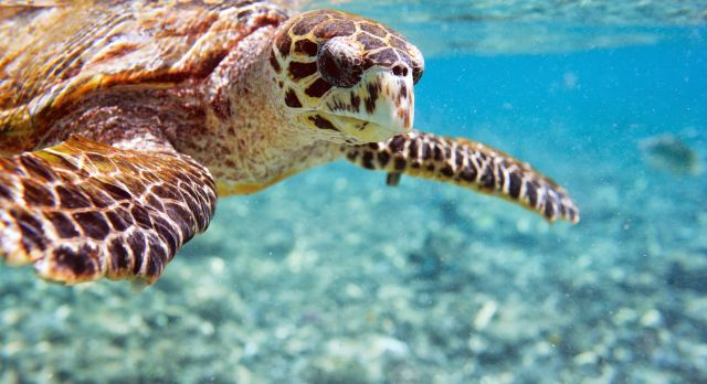 Seychelles Island Turtle