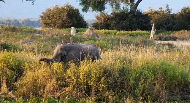 highlights of Zimbabwe - elephant safari