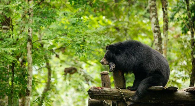 Bär im Xe Pian Nationalpark