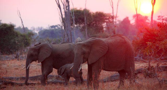 Sonnenuntergang auf Sambia Safaris