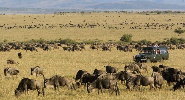 Masai Mara Safari - große Tierwanderung
