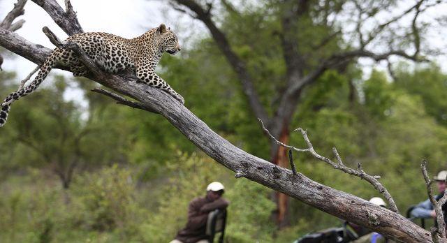 Krüger Safari