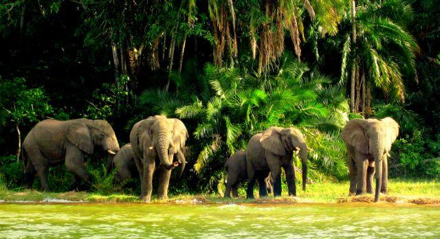 Rubondo - luxury African safari