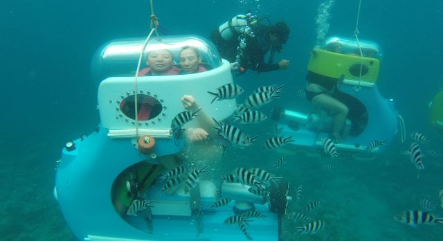 Colorful fishes underwater at Mauritius - Luxury African safari