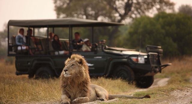Enchanting Travels-Botswana Tours-Okavango Delta-Sandibe Safari Lodge-Game drive
