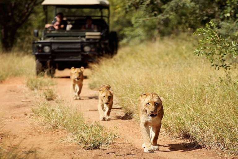 Kruger: The Best South Africa Safari Adventures