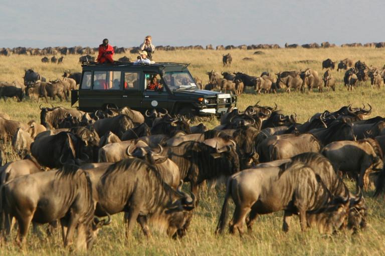 Safari-Gänger im Geländewagen inmitten riesiger Gnu-Herde in Kenia