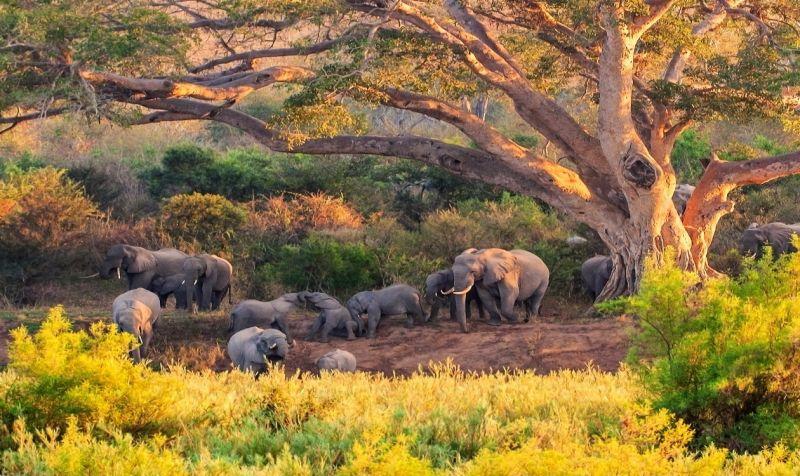 Krüger Safari: Elefanten im Nationalpark