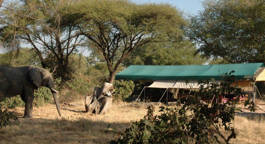 Safarizelte unter Bäumen