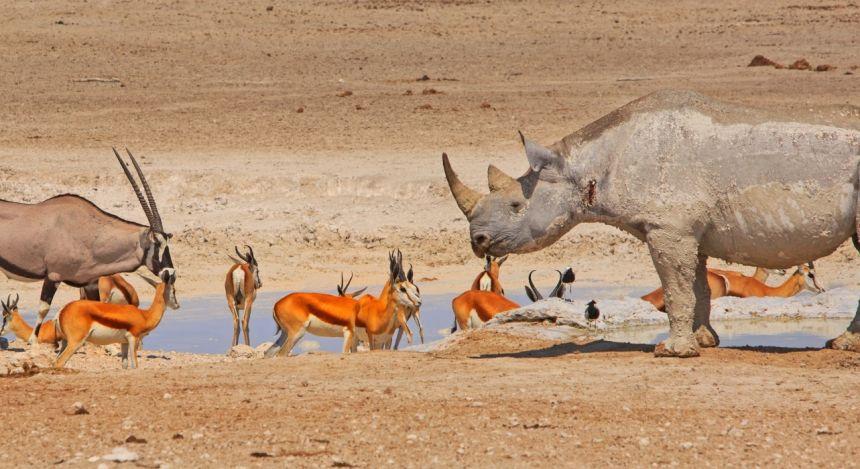 Nashorn, Oryxantilope und Gazellen an Wasserstelle im Etosha-Nationalpark in Namibia
