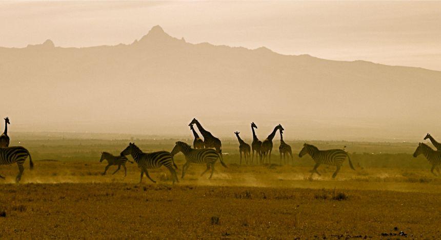 Giraffen vor dem Mount Kenya