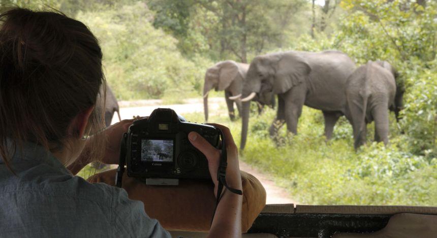 Blick aus dem Geländewagen auf Elefantenherde