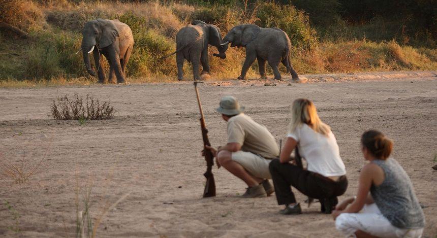 Safari-Gänger beobachten Elefanten
