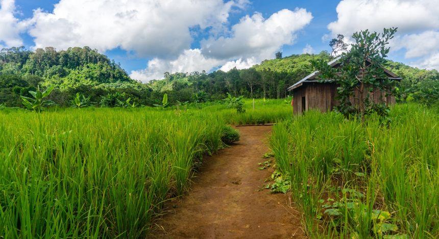 Hütte und Pfad in grüner Natur