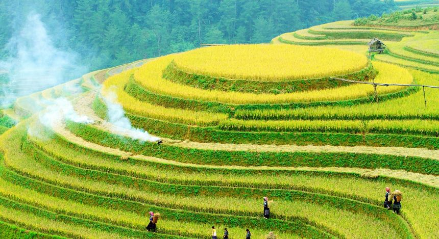 Enchanting Travel Vietanam Tours Mu Cang Chai Rice fields on terraced of Mu Cang Chai, YenBai, Vietnam. Rice fields prepare the harvest at Northwest