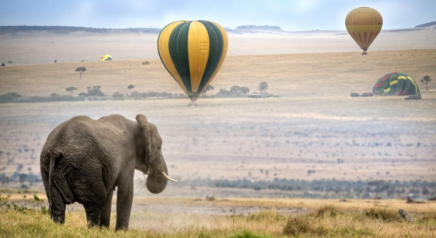 Elefant mit Heißluftballon im Hintergrund