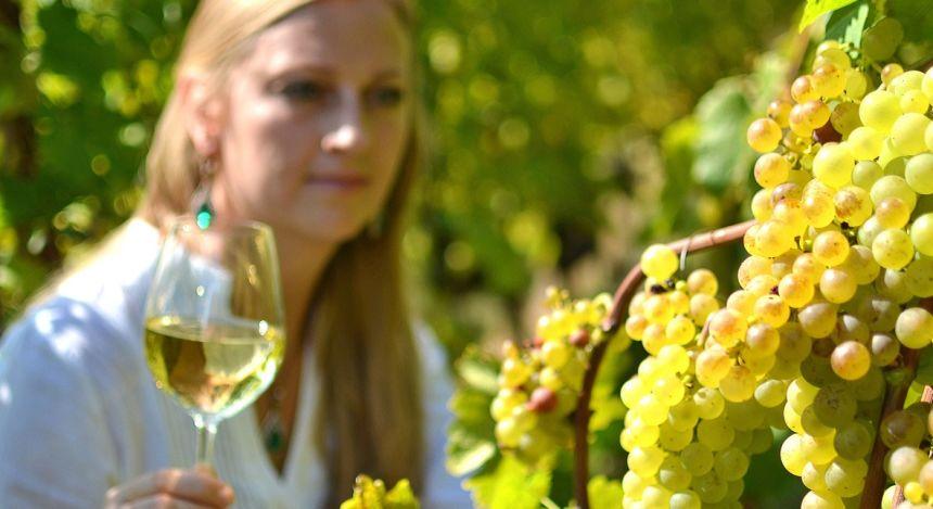 Wine Tours Chile Vineyard (4)