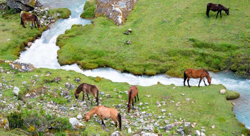 Pferde grasen in Flusslandschaft
